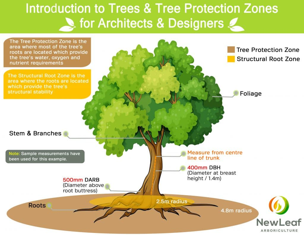Intro to Trees - an infographic