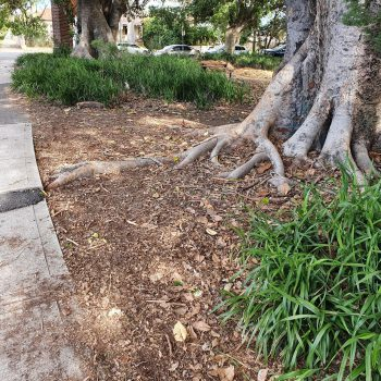 Gather and review information on trees